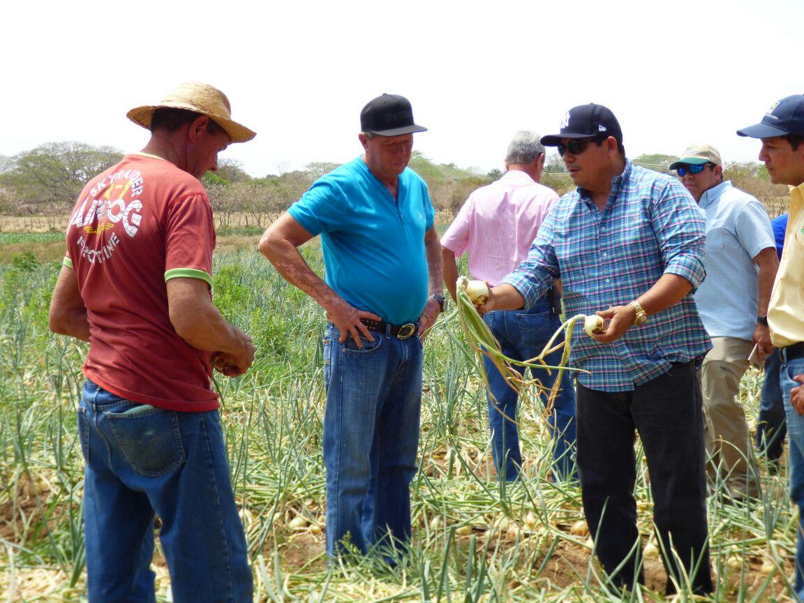 Cebolleros Herreranos Pactan Comercializaci N Del Rubro Critica # Muebles Cebollero